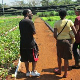 Cuba Organic Farm to Table Tour Havana VIP