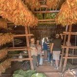 Cuban Cigar Tobacco Farm Tour Havana VIP