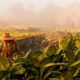 Tobacco Farm Vinales Valley Pinar del Rio Havana VIP